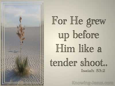 Isaiah 53:2 He Grew Up Like A Tender Shoot (beige)